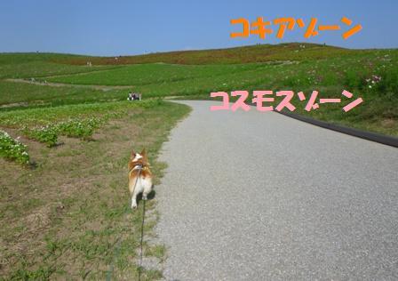 P1020615-b.jpg